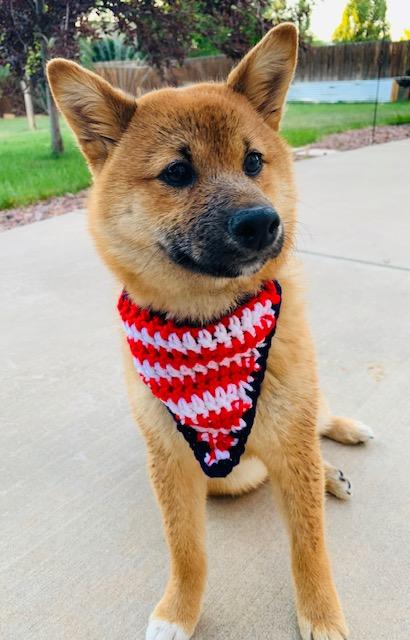Crochet Puppy Bandana- Free Pattern